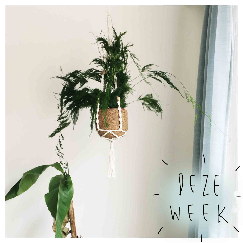 Deze week #5
