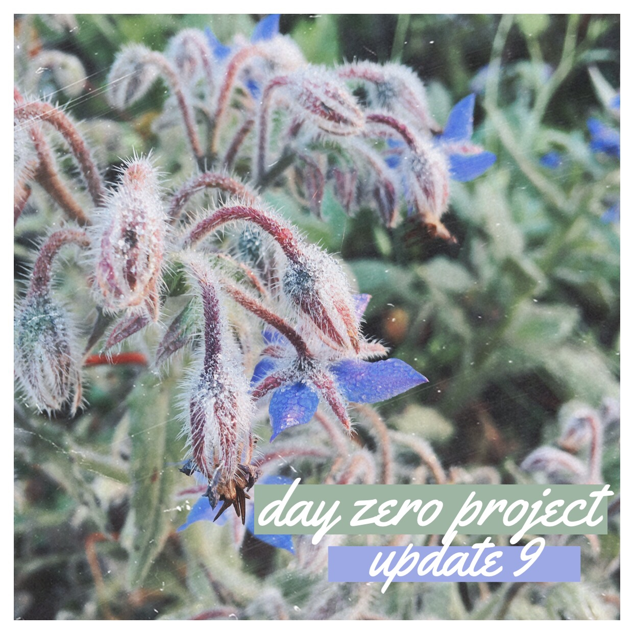 Day zero project | Update 9