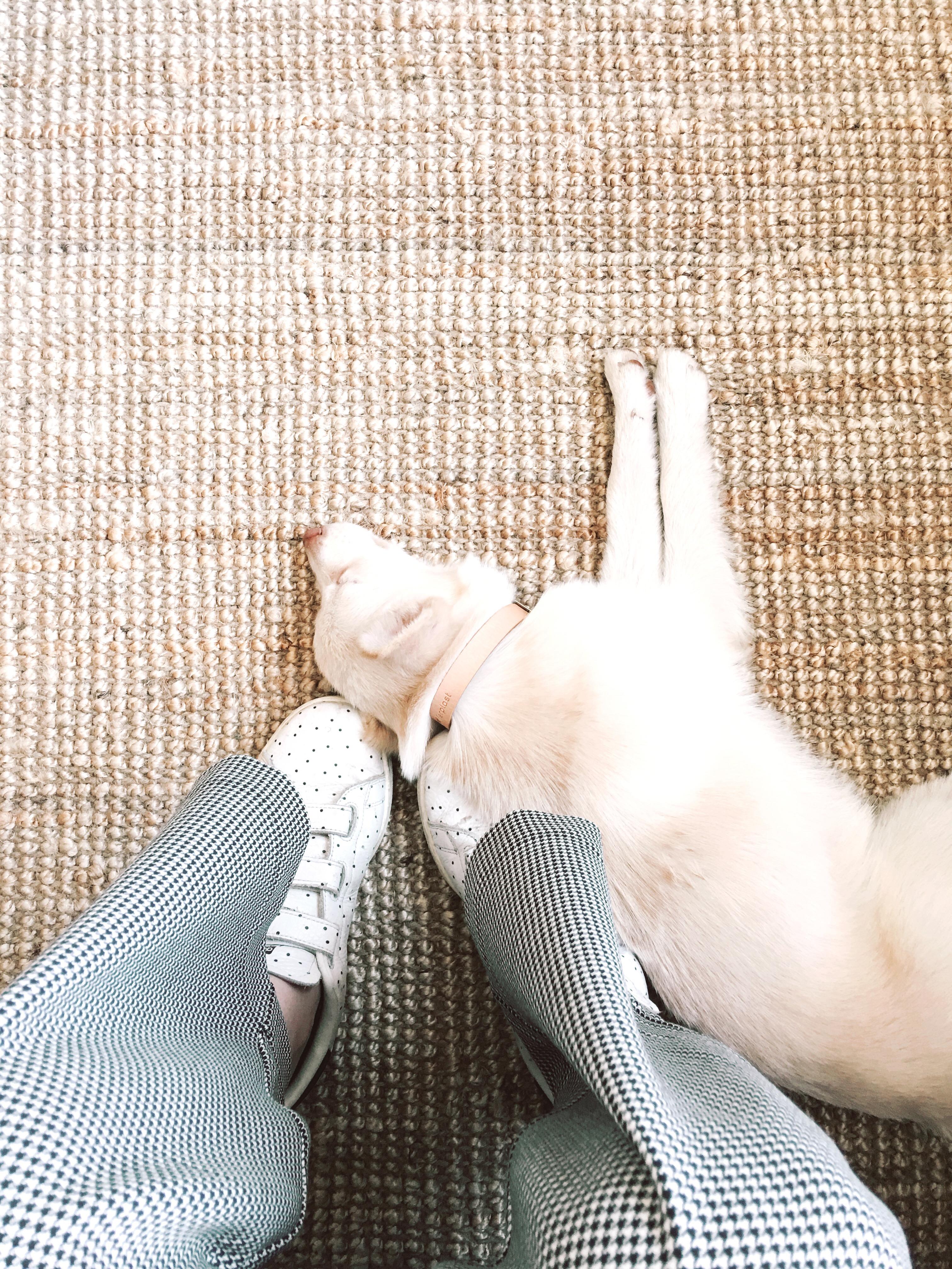 Diary | We hebben een nieuw hondje!